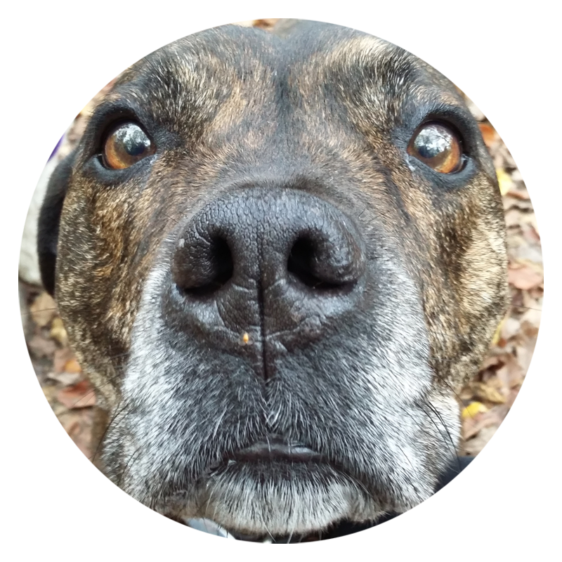 If you're looking for a professional dog walker in the North London area then this guy 'nose' who's best:-)