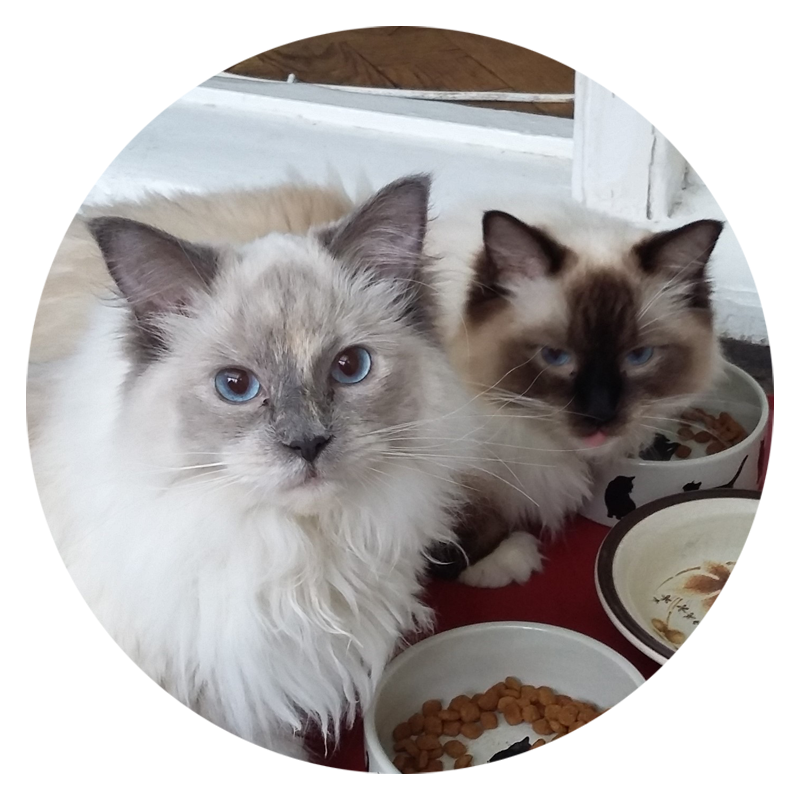 When you have to leave your precious cats, you can be safe in the knowledge that they are well looked after when I cat sit for you:-)