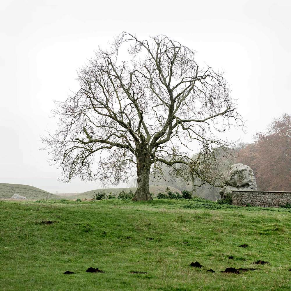 Avebury-Treeweb.jpg