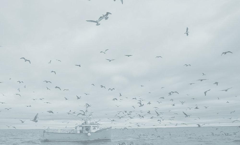 Nylon Regenerado - a partir de basura, residuos plásticos recolectados de campos y océanos.
