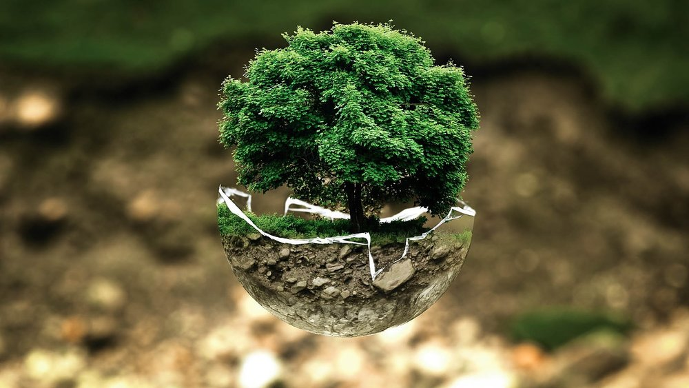 FOR EACH BOX A NEW TREE WILL GROW