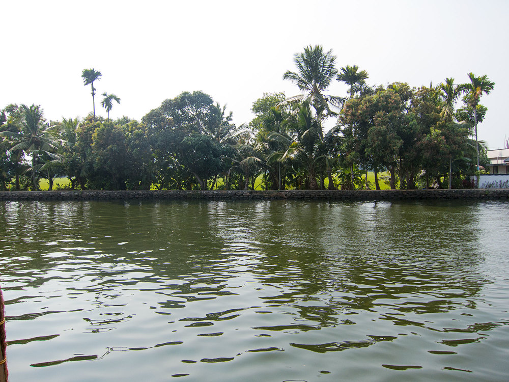 Shore of the Kerala backwater.