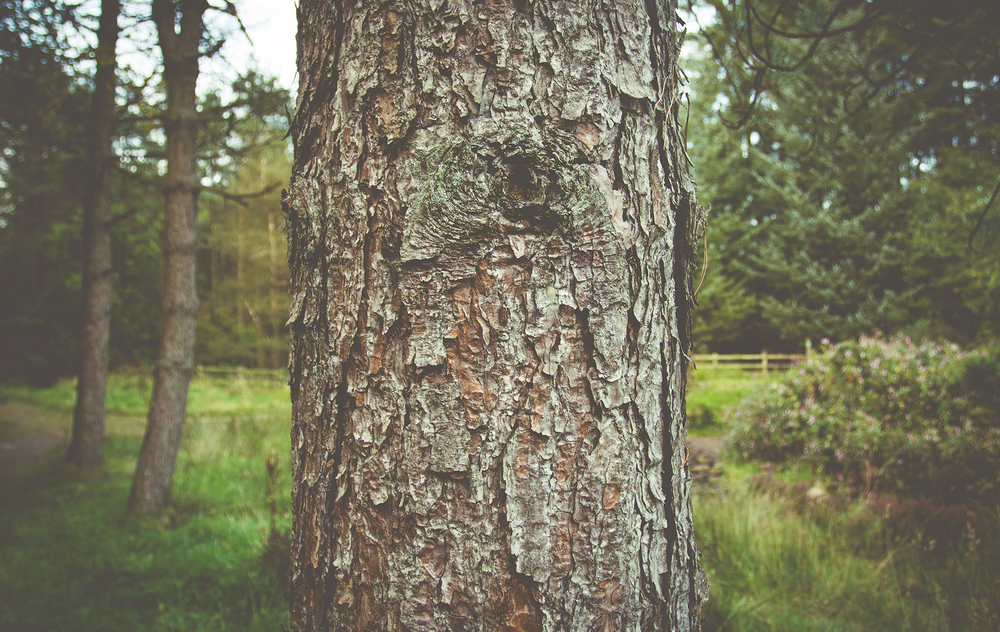 ForestPack2_42.jpg