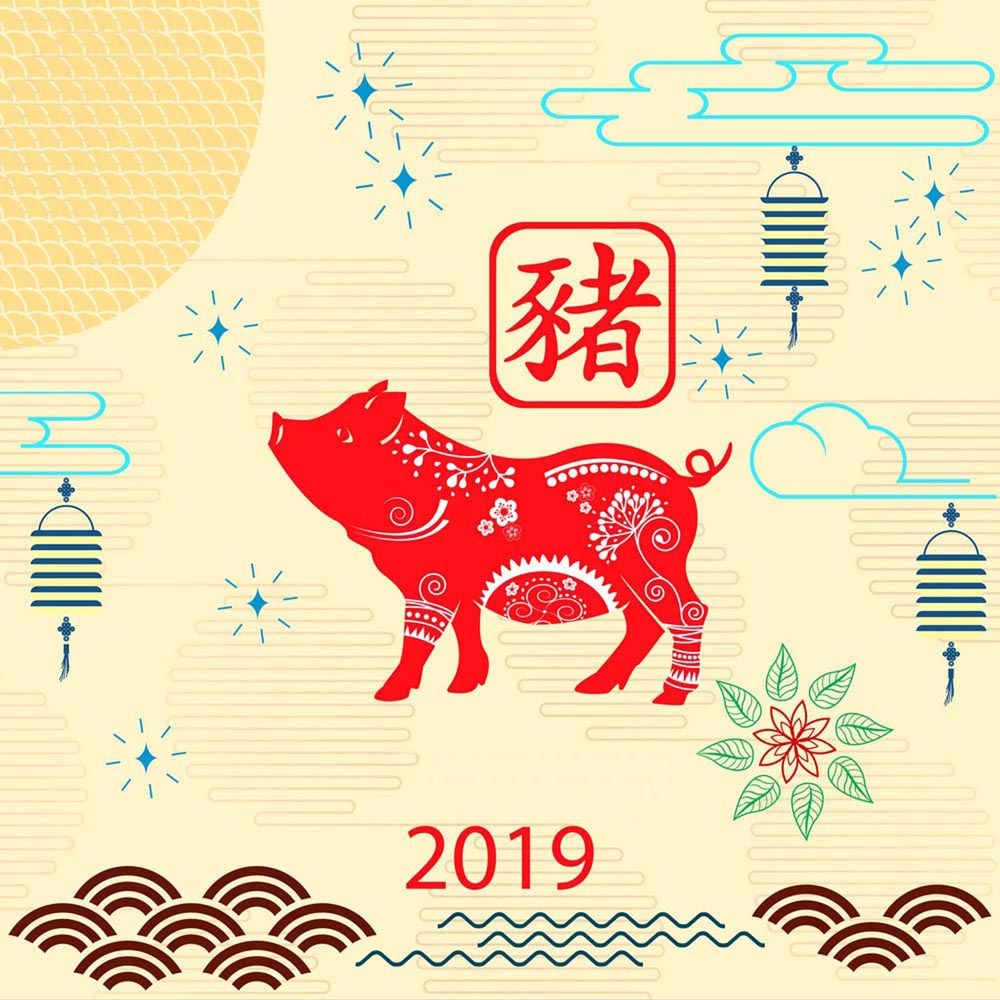 Happy Chinese new year 2019 card with pig. Chinese translation P