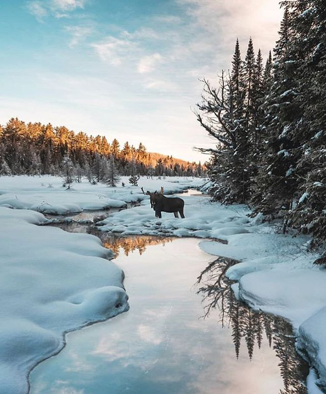 Algonquin Park  3 hours 18 minutes  Photo via @fossfocus  Elliot, that u? Bundle up and set those alarms, 'cause it's prime 'Gonq season for sunrise-chasing and moose-spotting - this photog saw five while he was there! Tell us your favourite Algonquin lakes/trails for this time of year (not comment-baiting, genuinely curious.) Also tell us your favourite moose: Elliot, Bullwinkle, or the one from Riverdale (comment-baiting). #escapetoronto