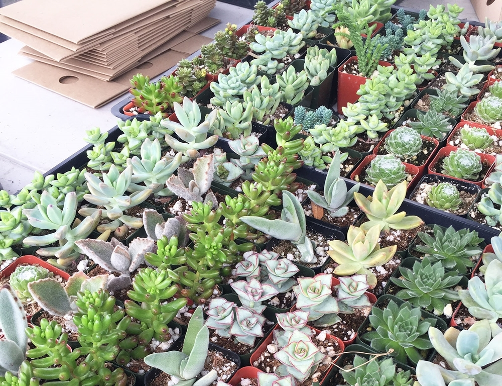 blog_flea_succulents.jpg