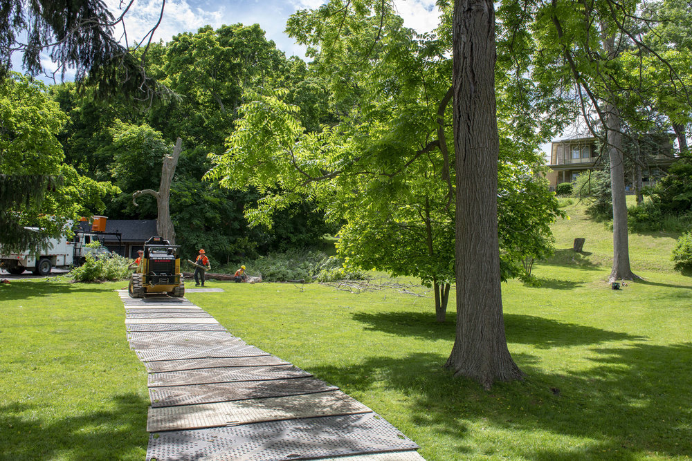 tree removal02.jpg