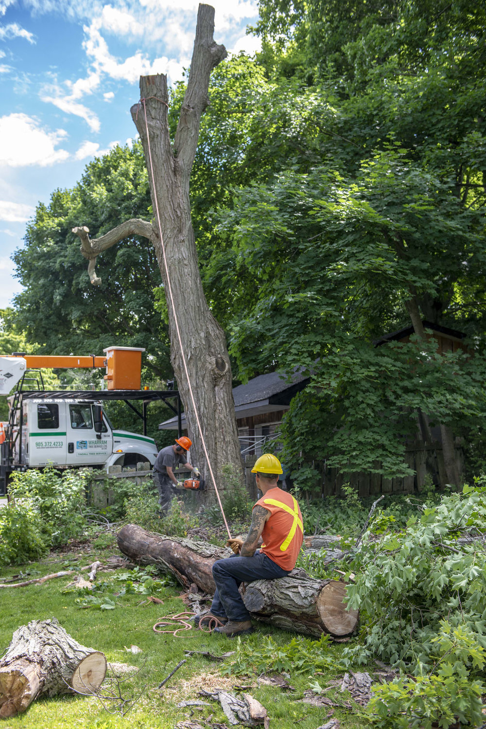 tree removal03.jpg