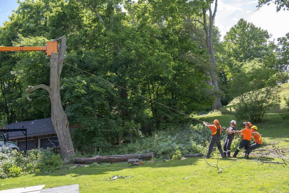 tree removal05.jpg