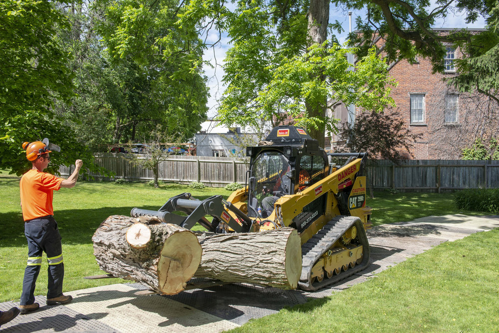 tree removal06.jpg