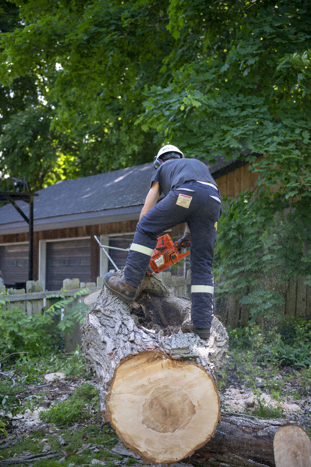 tree removal09.jpg
