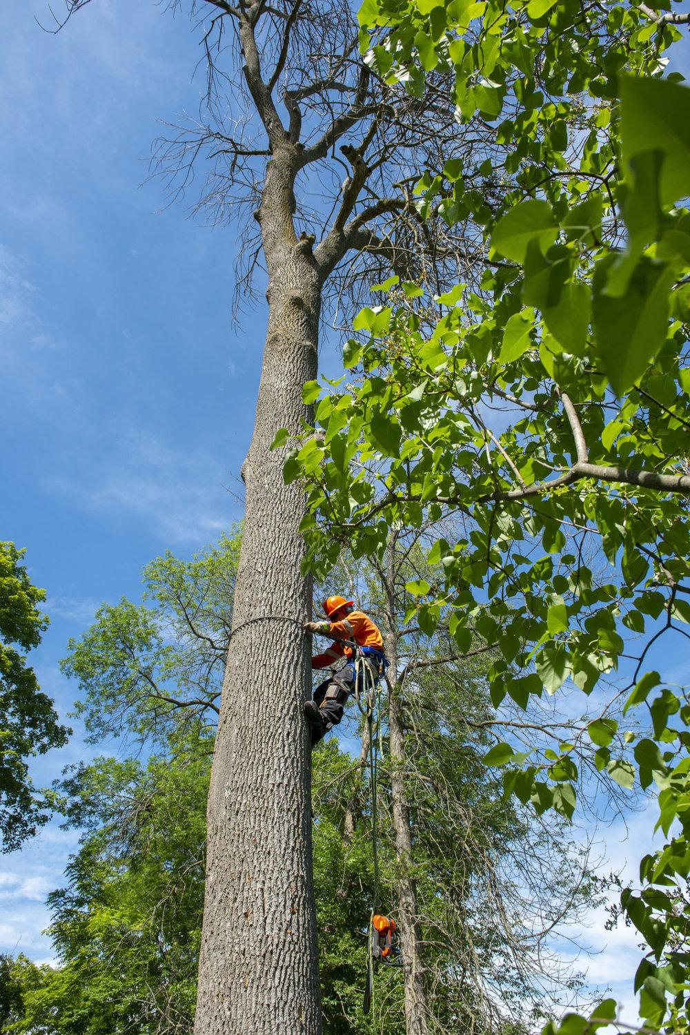 tree removal11.jpg