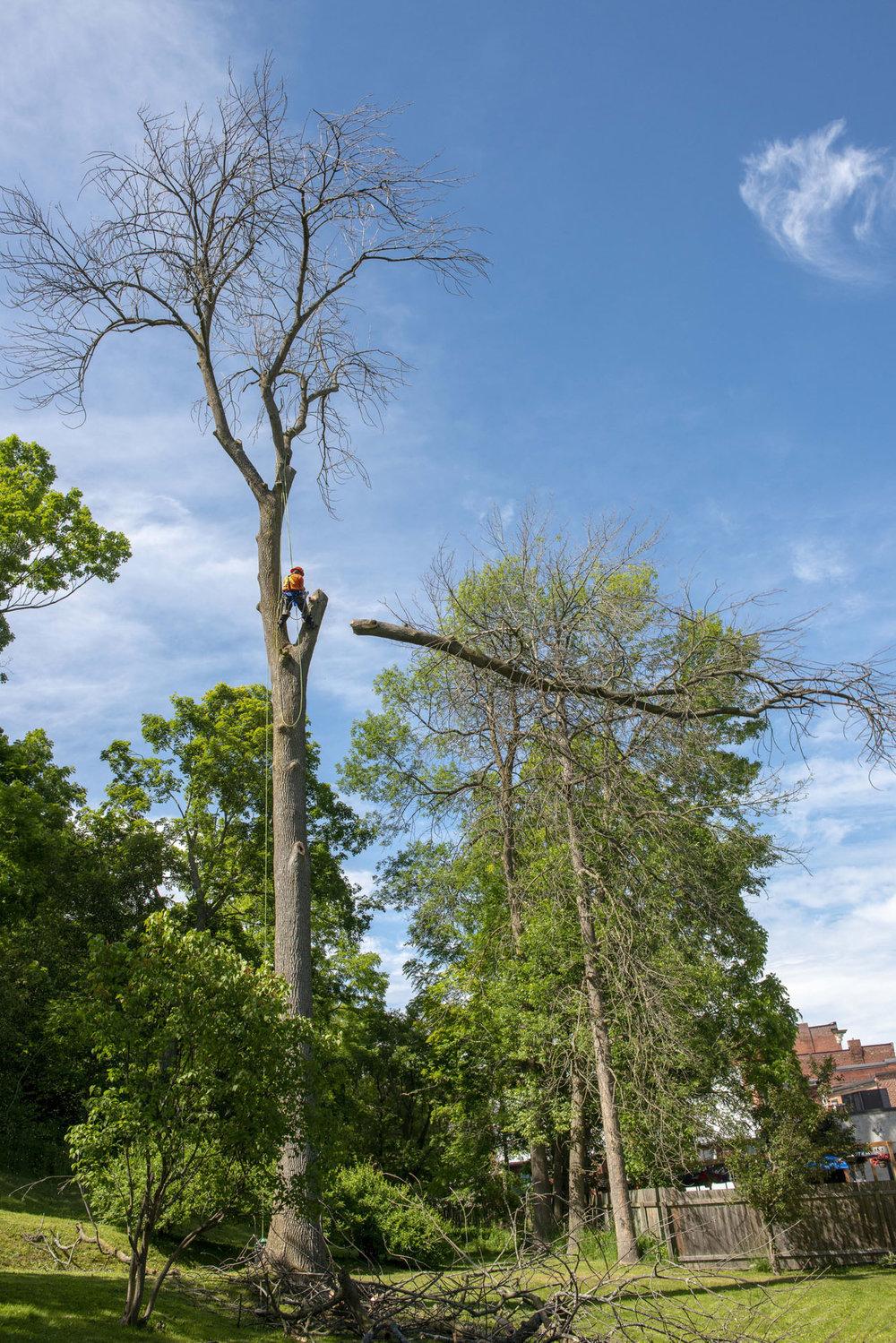 tree removal13.jpg