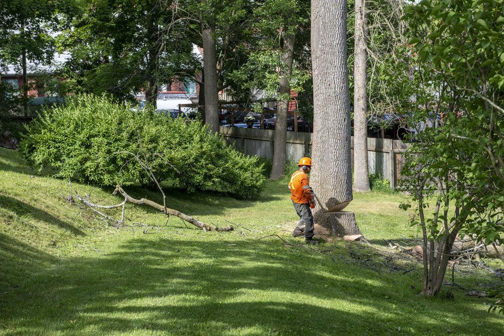 tree removal15.jpg