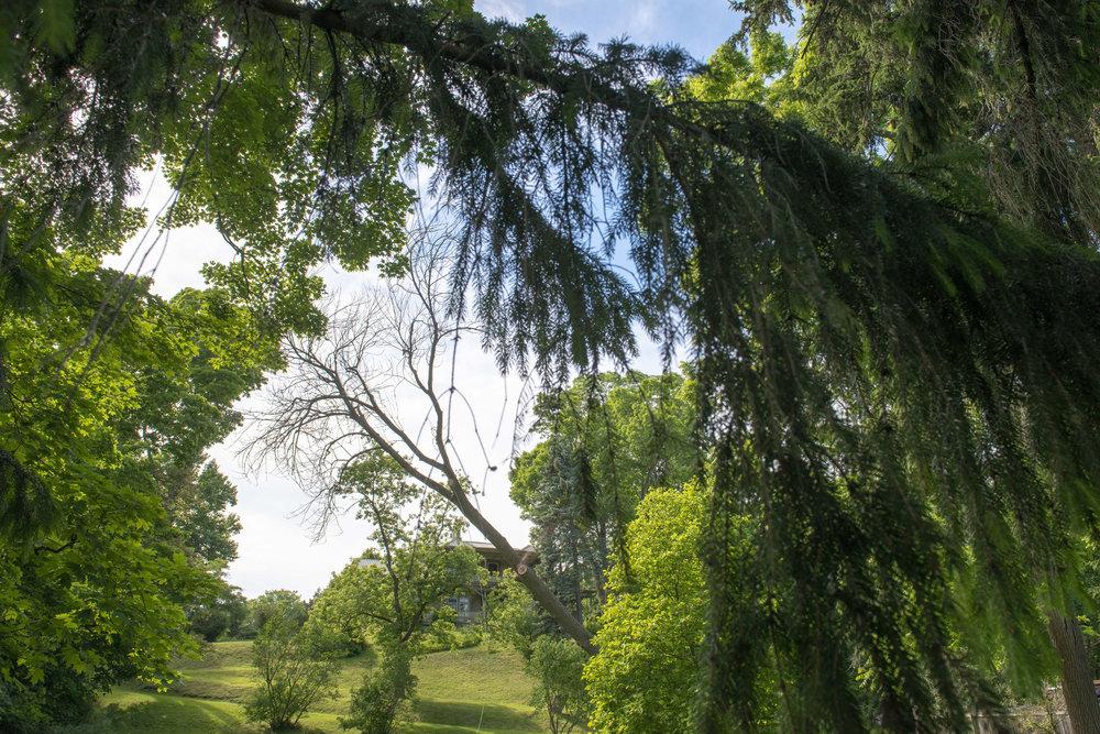tree removal17.jpg