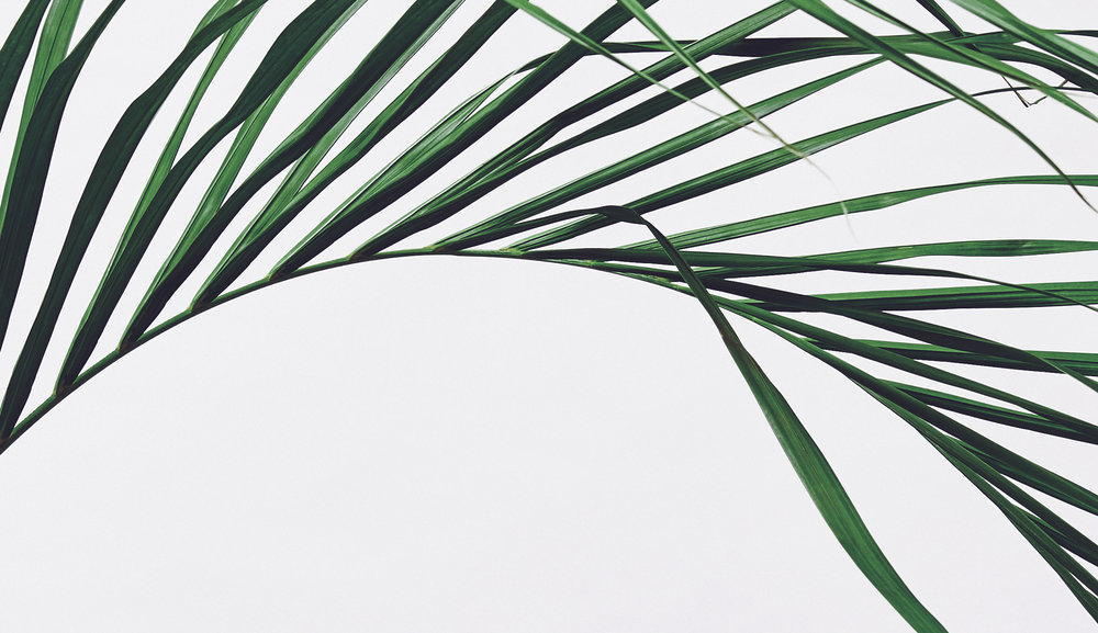 am:Surf Palm Leaf