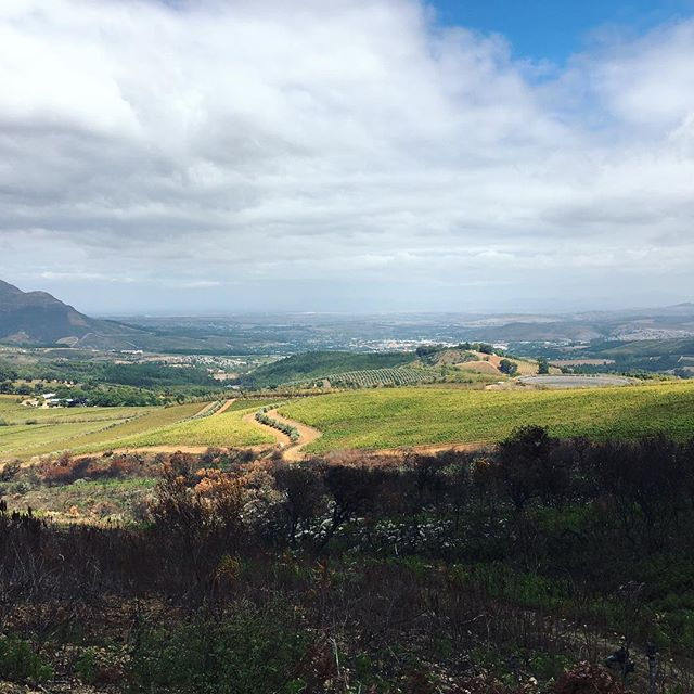 We're taking a mental trip to magnificent Stellenbosch on this #traveltuesday. Where will you go in your daydreams? . . . . . #southafrica #travel #stellenbosch #winecountry #wine #instagood #instatravel #travelphotography #wanderlust #wanderer