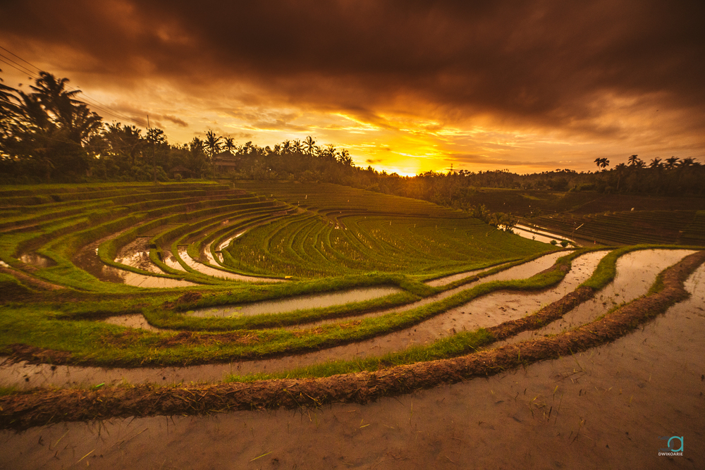 sunset-rice-terrace