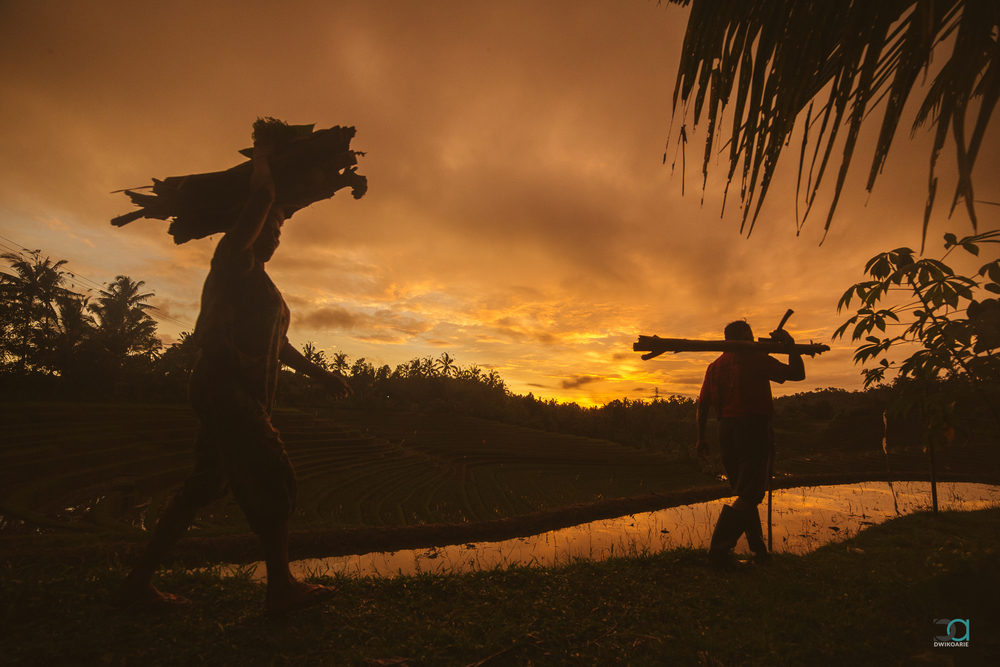 sunset-silhouette-travel-photography-bali