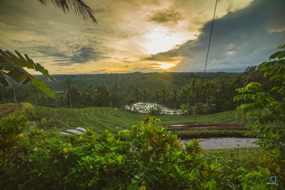 sunrise-bali-rice-terrace