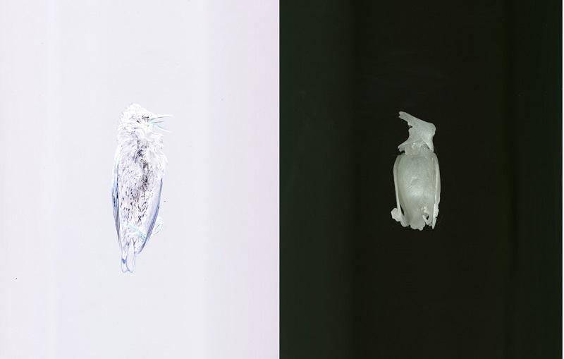 Ligia Bouton, I Am No Bird, 2015