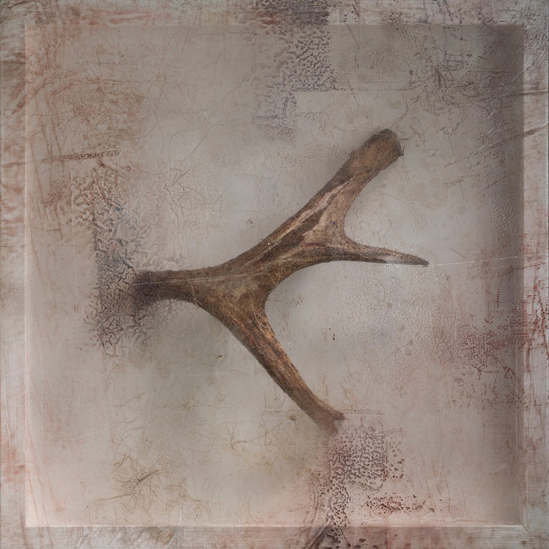 Sonya Kelliher-Combs, Remnant (Moose Antler), 2016