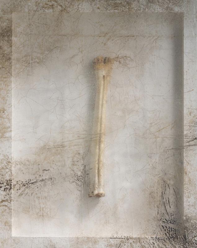 Sonya Kelliher-Combs, Remnant (Moose Bone), 2016