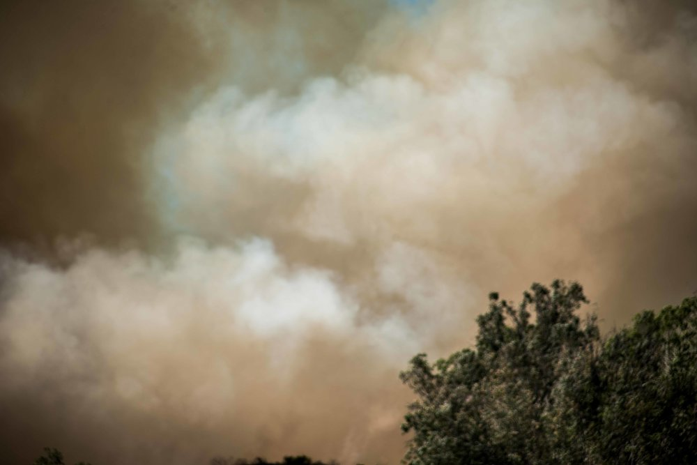 Tree Fire, Monrovia, California, 2016
