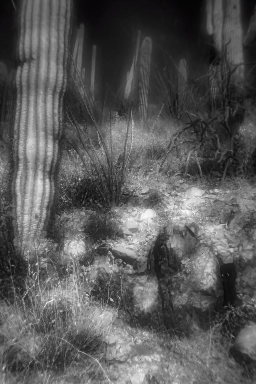 SaguaroC72.jpg