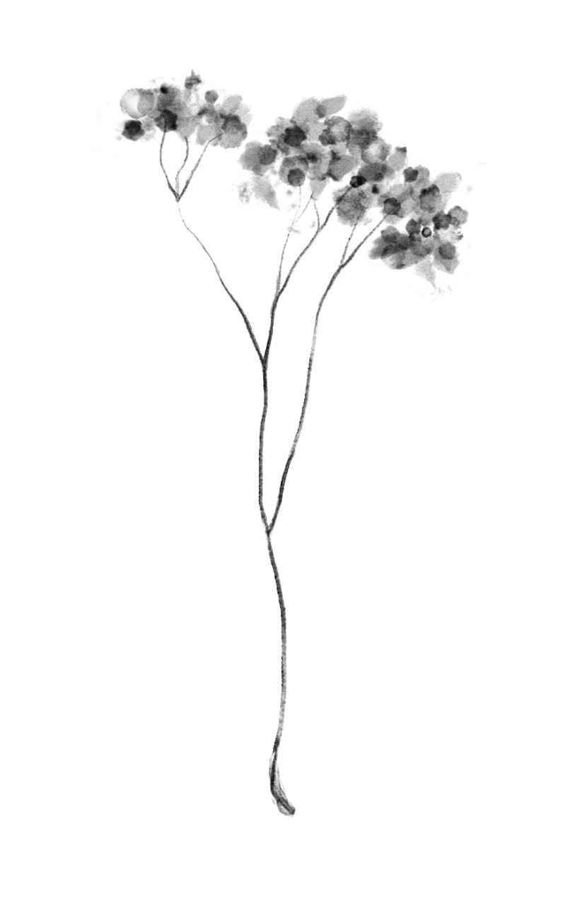 blossomblisslogo_flowerstransparent-10.jpg