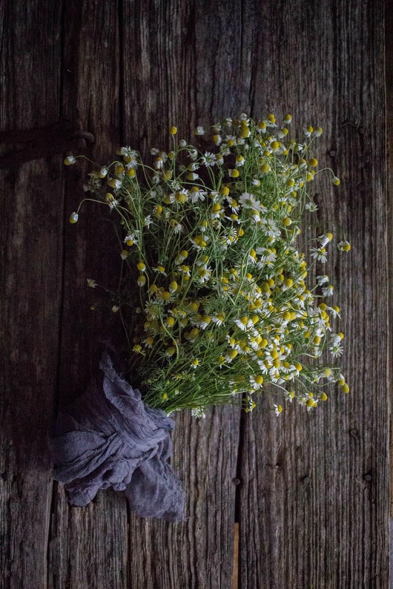 chamomile bouquet.jpg