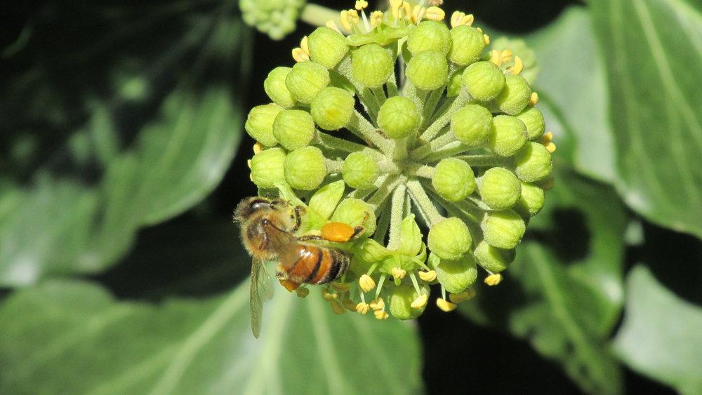flower-bee.JPG