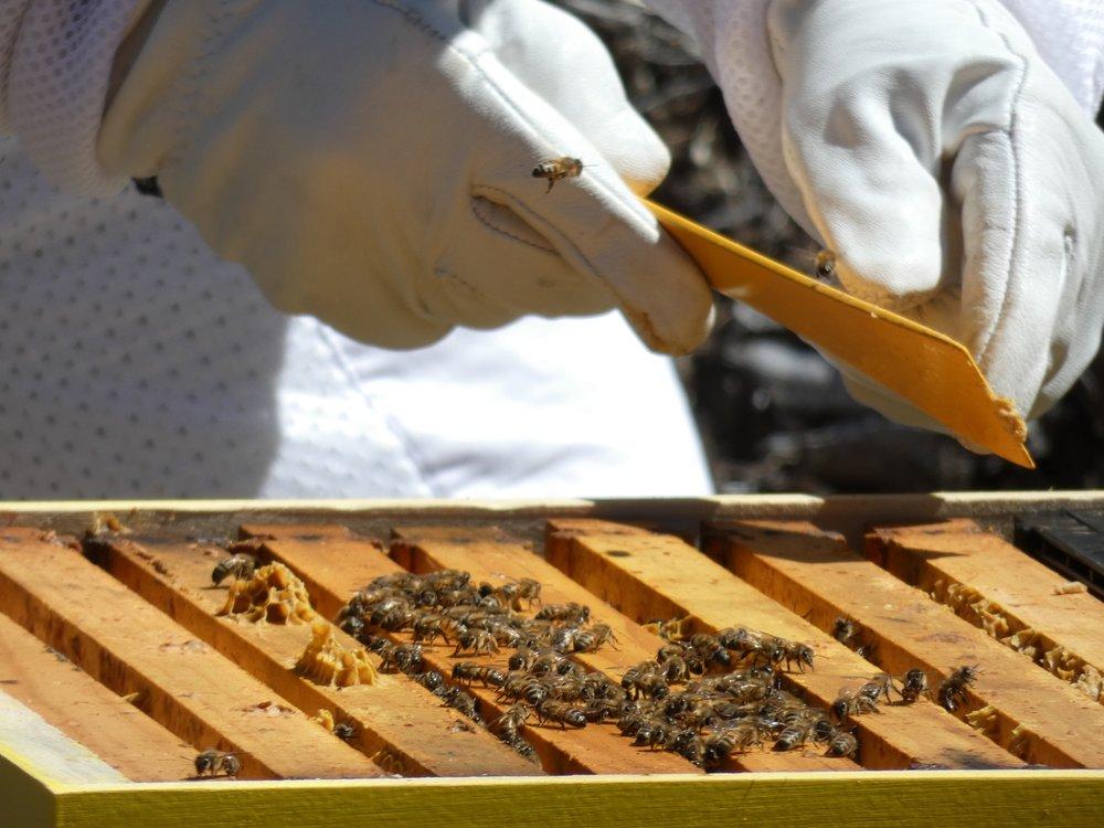 beekeeping-austin-texas
