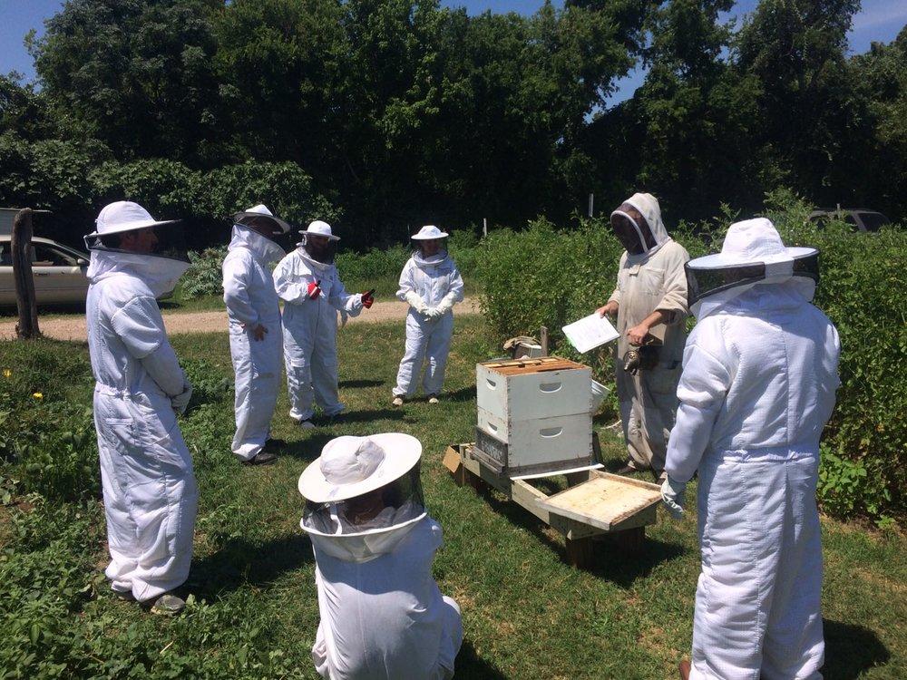 honey bees class