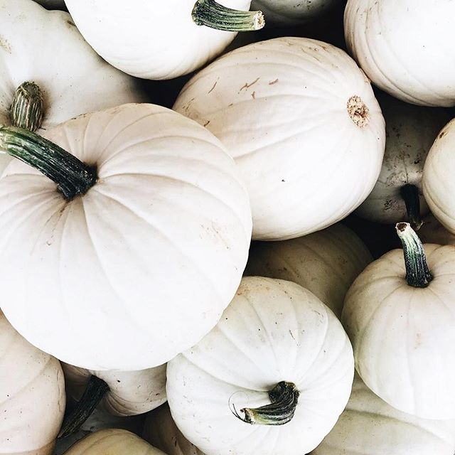 Getting our house pumpkin-fied a little later this year (It's normally a birthday tradition the first week of October, but #life.), but it's coming together. More photos in my Stories tomorrow! Give me all the white pumpkins. 😍😍 #polegreenfarmersmarket