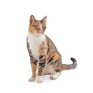 cat77709-161215_1481782095220.jpg
