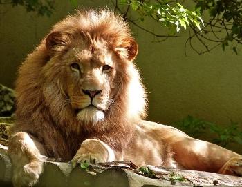 Vendl-narsisme-leeuw.jpg