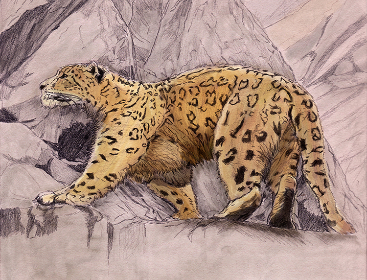 ilustracion leopardo de las nieves.jpg