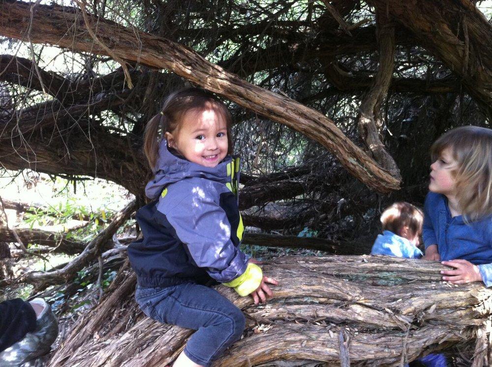 explorers tree.jpg