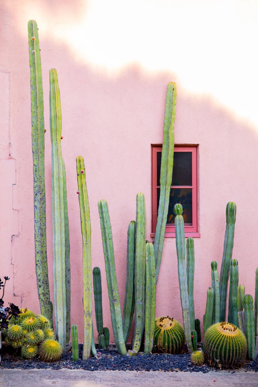 lou-mora-cactus-lifestyle-001.jpg