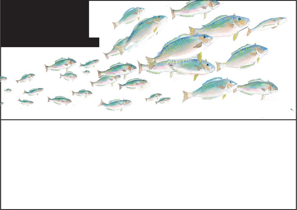 fishup.jpg