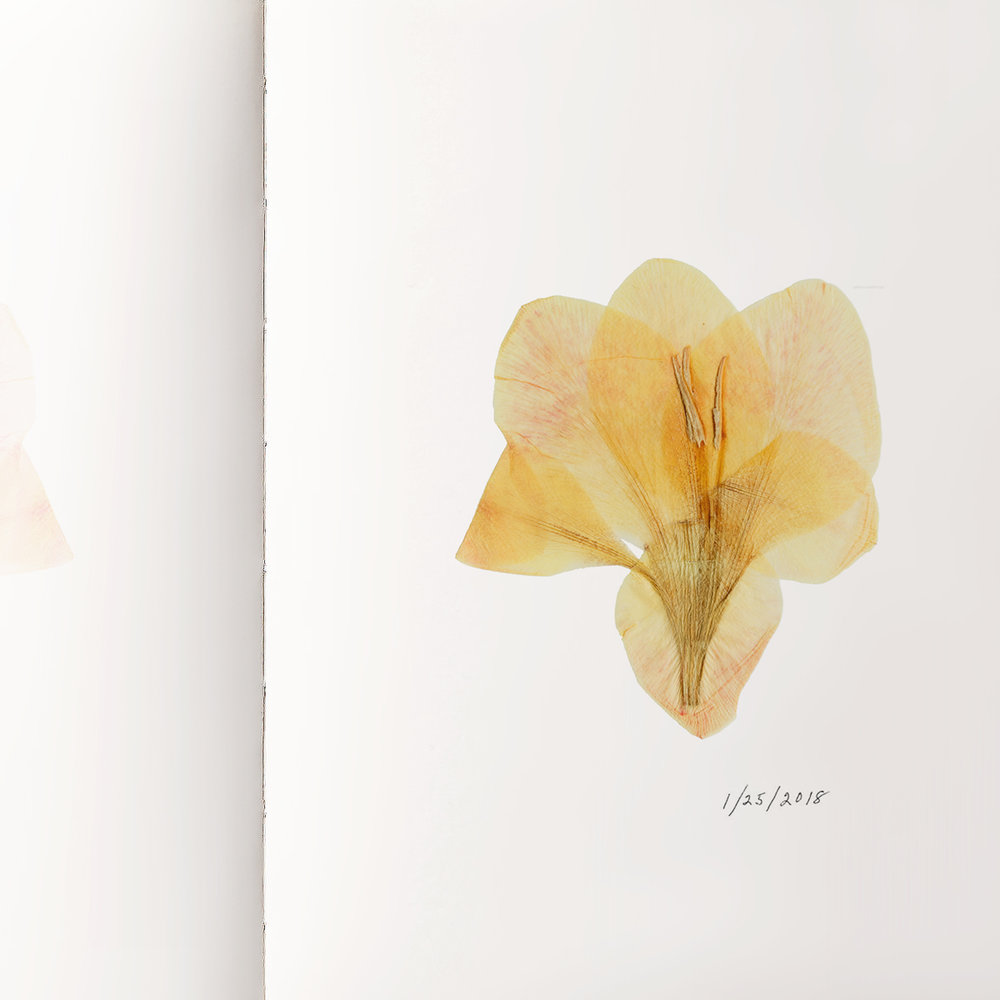 DAVE SALANITRO  Journal entry January 25, 2018 Found object, crocus 6.25 × 4.75 × 1.75 inches Collection of the designer