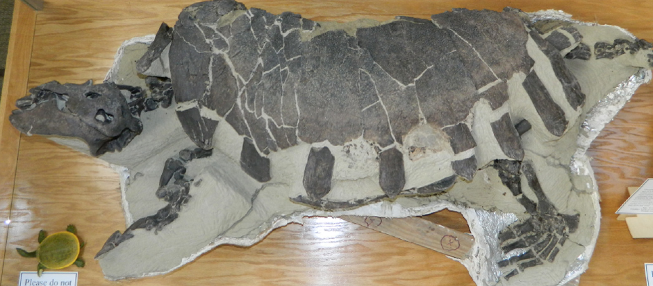 Ben's Big Turtle (Credit: Tate Museum, Casper, WY)