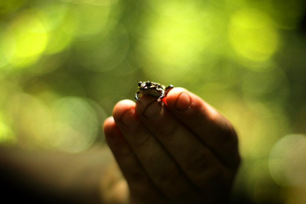 FrogTone.jpg