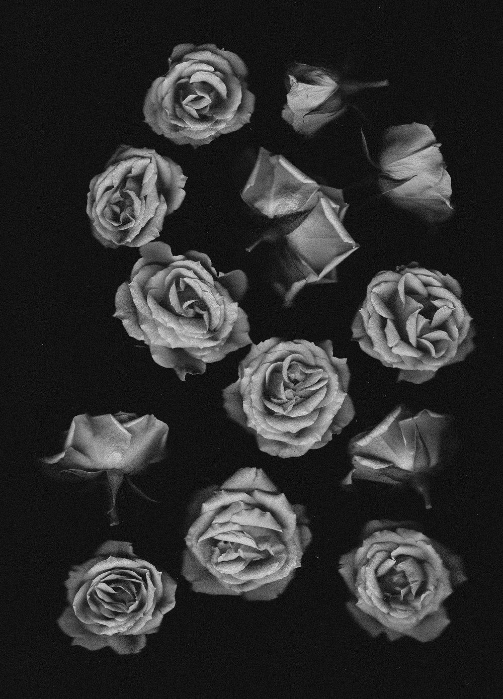 flower-roses-scan-2 copy.jpg