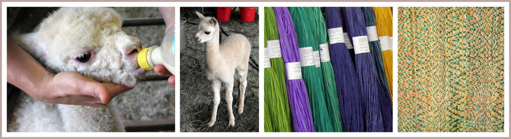 About Annadale Alpacas