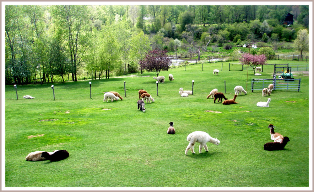 Annadele Alpacas Farm, Fine Crafted Alpaca Products