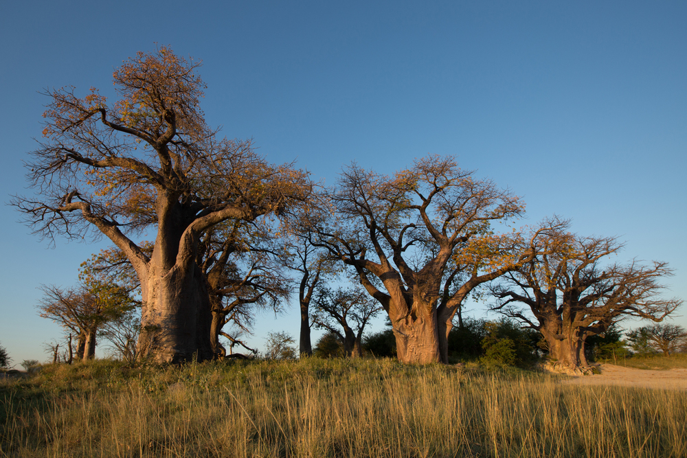Botswana Safari - African Travel Specialists