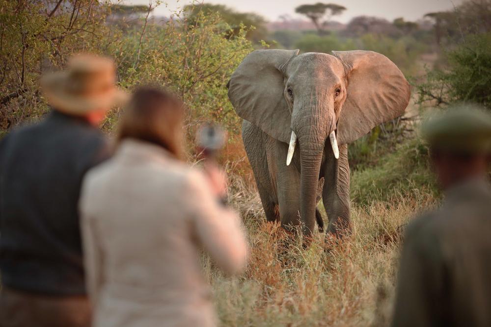 Ruaha National Park, Tanzania