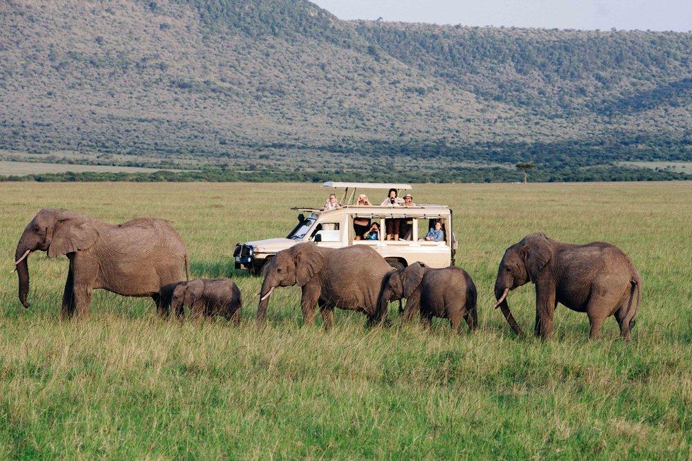 Kenya Safari Tallis Journeys Africa Travel.jpg